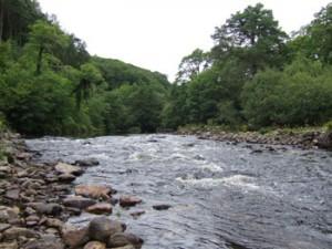 Avonmore River, Ballygannon Wood