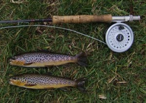 Brace of Liffey Trout
