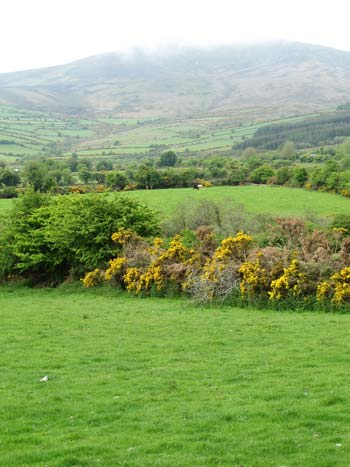 Blackstairs mountains above Kiltealy, Co. Wexford