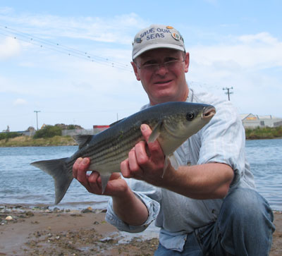 Thick lipped Vartry Estuary Mullet tempted by bread flake.