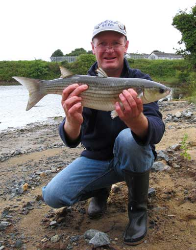 Thick lipped mullet, caught on bread flake, Vartry Estuary, Wicklow Town.