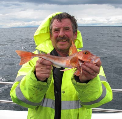 Red gurnard off Hook Head, Co. Wexford.