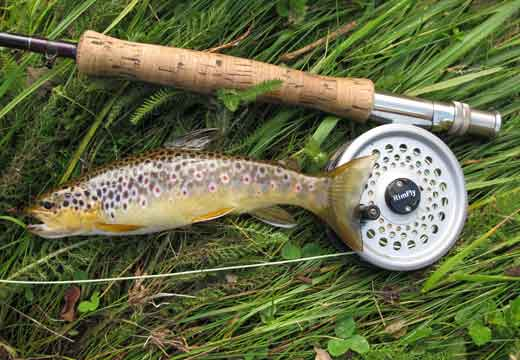 Wild brown trout, River Slaney, Glen of Imaal, Co. Wicklow.