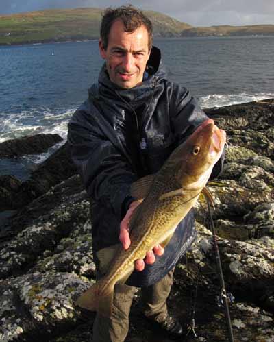 Beara peninsula codling.