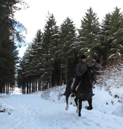 Dixie and Mandy cantering, Carrig Wood, Ballythomas Hill, Co. Wexford, Ireland.