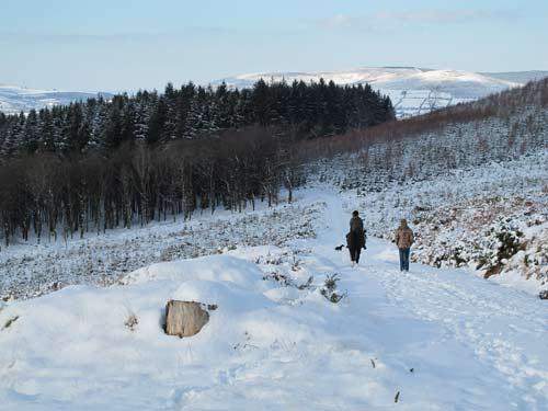 Heading home, Carrig Wood, Ballythomas Hill, Co. Wexford, Ireland.