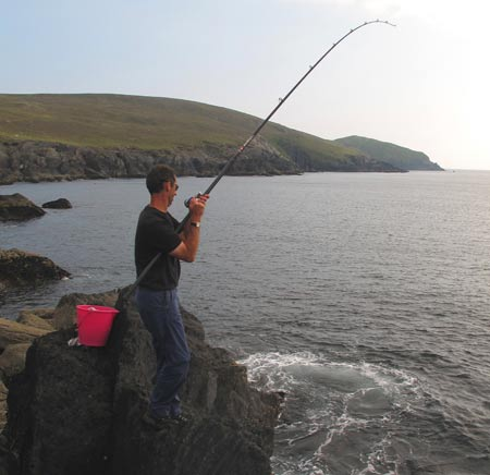 Playing a ballan wrasse on the Beara Peninsula, West Cork, Ireland.