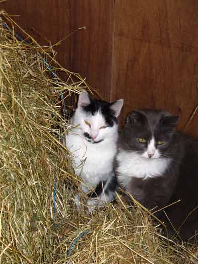 Rocky and Smokey in the stable.