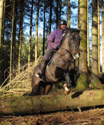Roz and Dixie jumping a pine log in Carrig Wood.
