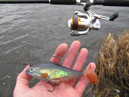 Storm Roach lure.