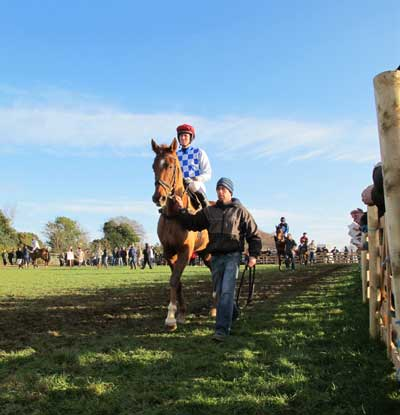 In the parade ring, S & D Hunt Point to Point, Fairwood Park, Tinahely, Co. Wicklow, Ireland.