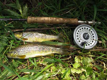 A brace of mountain trout, Avonmore River, Co. Wicklow.