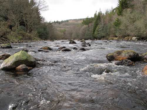 River Avonmore, Co. Wicklow, on St Patricks Day 2011.