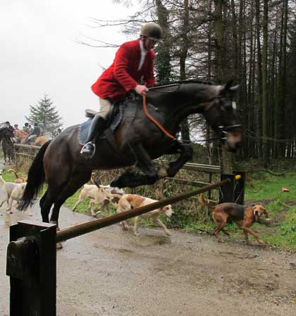 Huntsman David Nolan clears a forestry barrier above Shillelagh, Co. Wicklow.