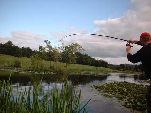 Fighting a carp at a secret Co. Laois venue.