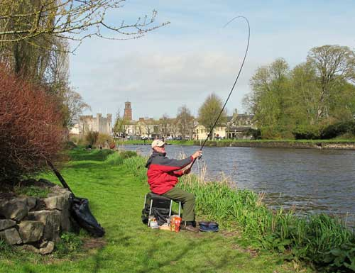 Casting the feeder, River Barrow, Athy, Co. Kildare.