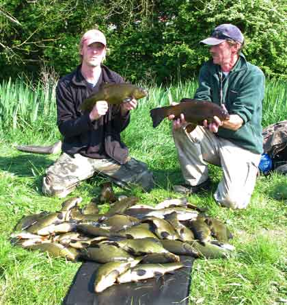 A royal catch of canal tench, Royal Canal, Ireland.