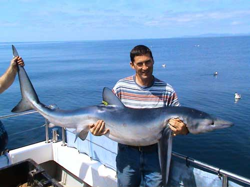 A specimen 112.lb blue shark caught 12 miles off the Beara Peninsula, West Cork by Adrian Sparrow.