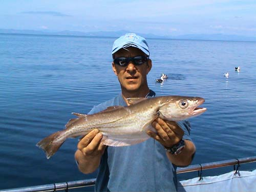A 2.lb 14.oz Whiting for John Angles, skipper of charter vessel Tigger II out from Castletownbere, West Cork, Ireland.