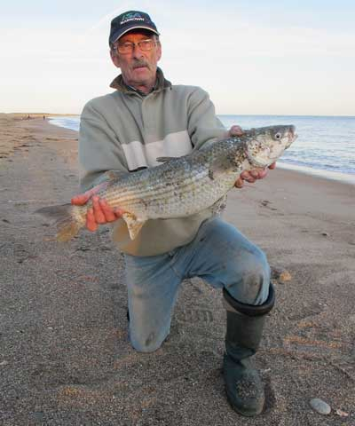Mike Wright with his surprise specimen mullet weighing 6.lb 2.oz from a Co. Wexford, Ireland, strand.