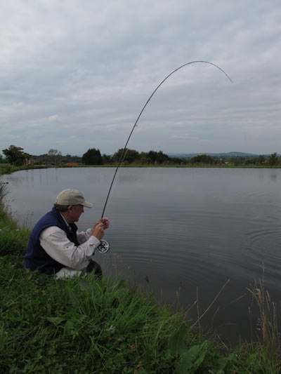 Playing a good rainbow at the Southern County Fishing Resort, Co. Carlow, Ireland.