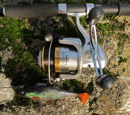 Storm roach lure and Shimano reel.