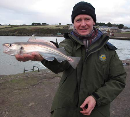 Large Waterford estuary whiting.