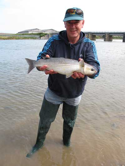 Mullet tempted by bread flake, the Vartry estuary, Wicklow town.