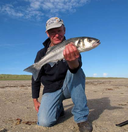 A bass caught while surf casting in Co. Wexford, Ireland.