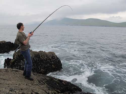 Fighting a large ballan wrasse fom a shore mark in West Cork, Ireland.