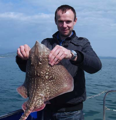 A thornback ray caught off Wicklow Head aboard skipper Kit Dunnes charter boat Lisin 1.