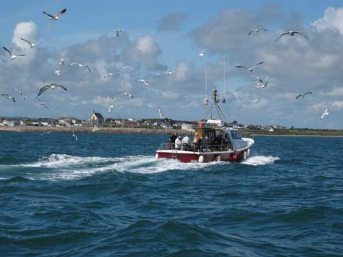 Returning home after a day fishing the reefs, Kilmore Quay, Co. Wexford, Ireland.