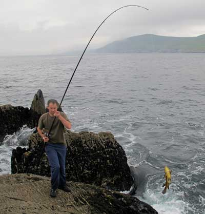 Lifting out a good wrasse, West Cork, Ireland.
