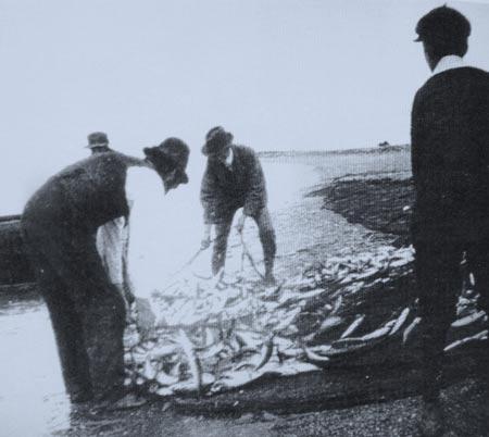Seine netting mackerel on the south beach Greystones, Co. Wicklow.