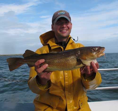 A nice red rock codling from fishing grounds off the Hook lighthouse, Co. Wexford.