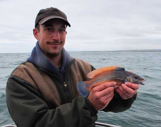 A colourful cuckoo wrasse boated off Hook Head.