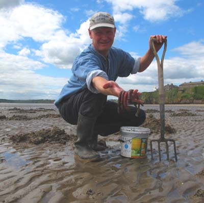 Digging lugworm on a sheltered strand, Co. Wexford, Ireland.