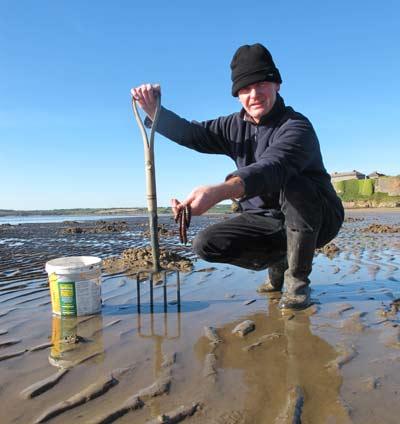 Sea fishing in Ireland, a bucket of lugworm.