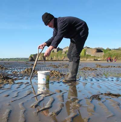 Sea fishing in Ireland, digging lugworm on a sheltered strand.
