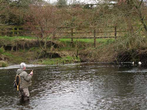 Playing a half pound River Liffey brownie.