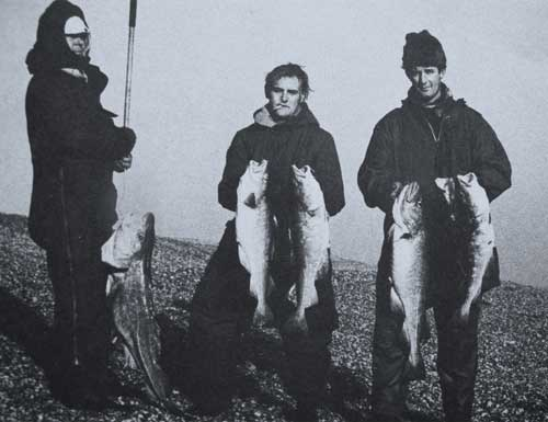 Testament to a wasted resource, beach caught cod from Dungeness, Kent, England. Prolific in the 1960's, now endangered.