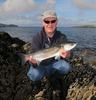 A nice Beara Peninsula grey mullet caught on bread flake.