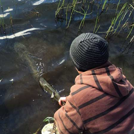 15.lb Irish pike caught and released.