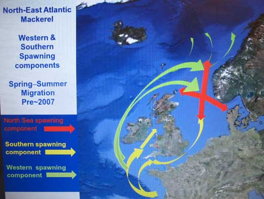 Chart showing migration routes of the Western, Southern, and North Sea components of the North East Atlantic mackerel stock.