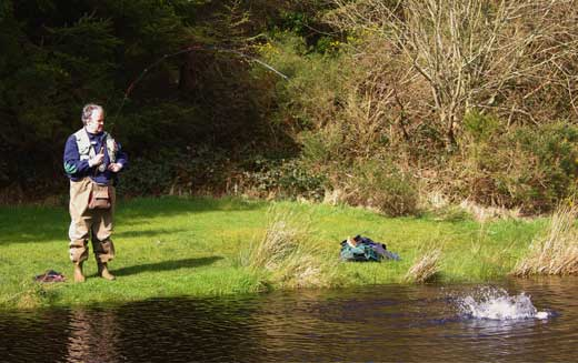 Playing a good rainbow trout at Annamoe Trout Fishery, Co. Wicklow, Ireland.