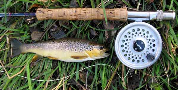 Wild brown trout from a Co. Wicklow stream.