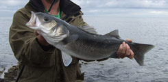 Irish Bass Fishery Policy, a Case for Innovative Action and Individual Responsibility