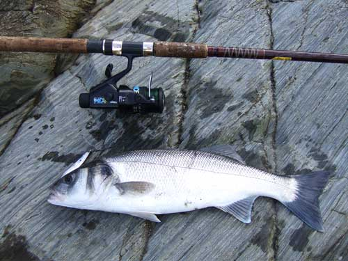 A lure caught four pound Irish bass.