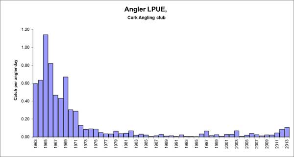 Competition landings of bass for Cork Sea Angling Club members 1963 - 2013.
