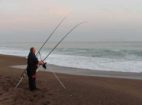 Sea fishing in Ireland, playing a bass on a south Wexford strand.